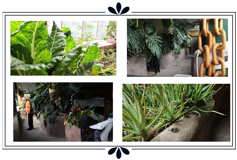 plantes multiples earthship