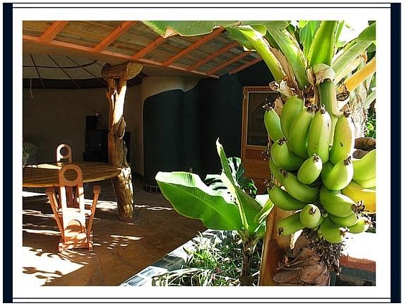 Bananier Earthship